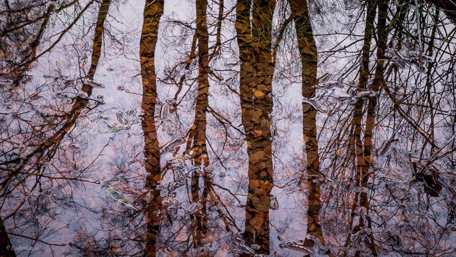 spegelbild träd