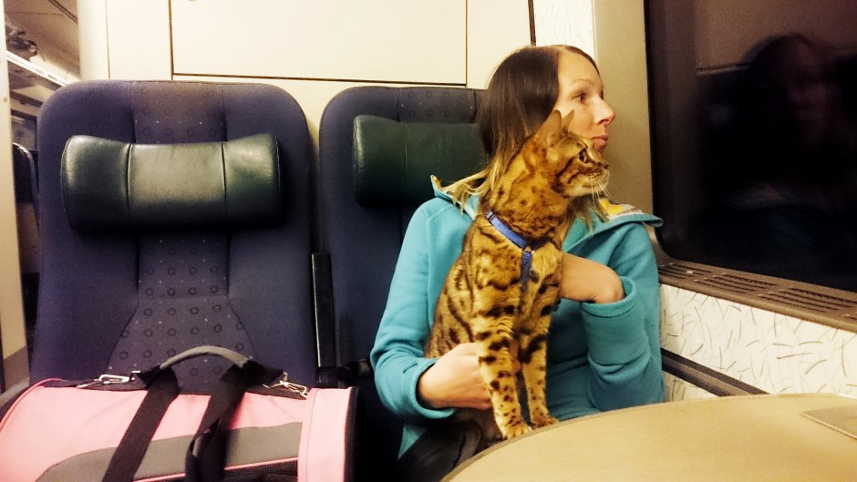 katt på tåg