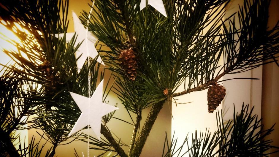 kottar och stjärnor jul