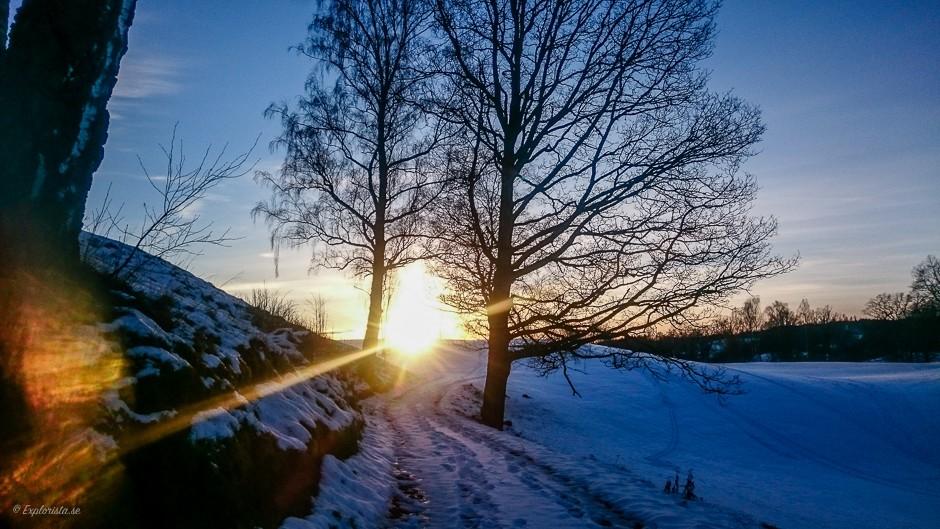 snö solnedgång träd