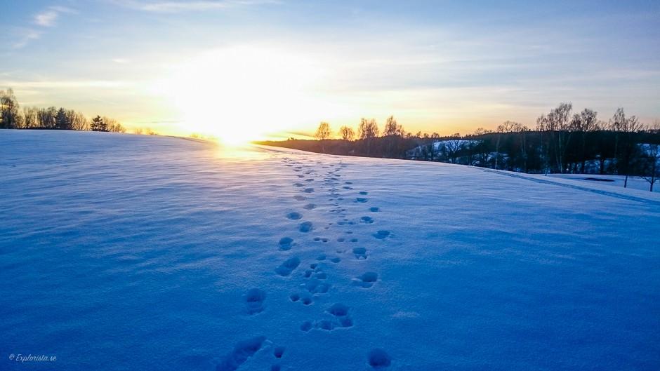 snö solnedgång