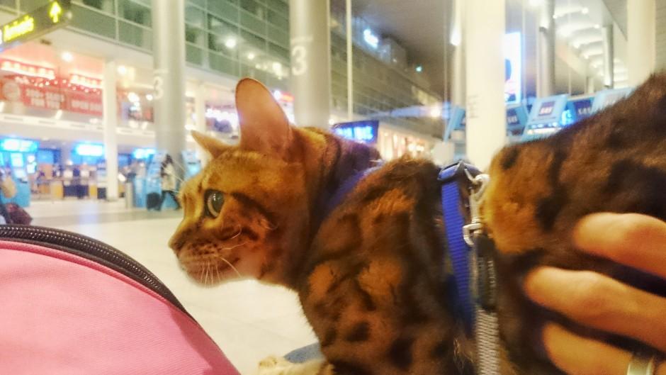 katt på flygplats