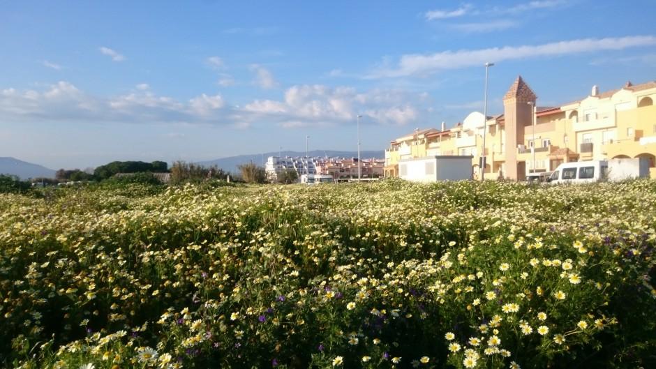 tarifa blommor