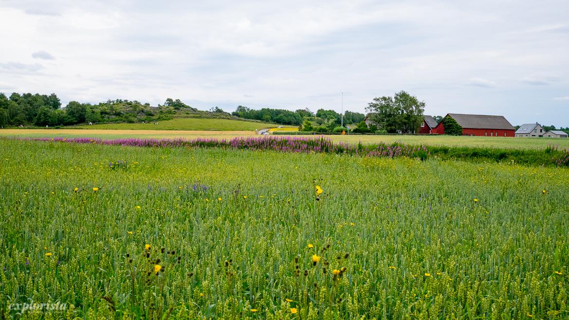 blommande fält utsikt