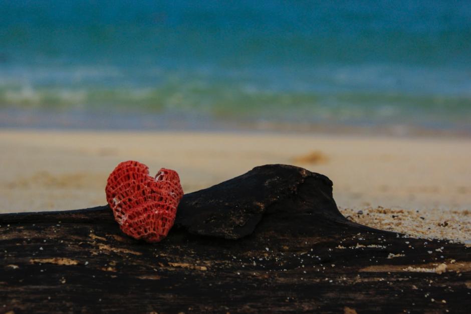korallhjärta