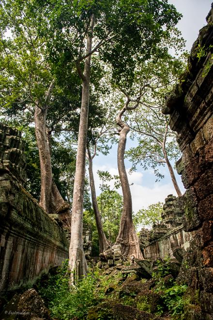 tempel i skogen kambodja