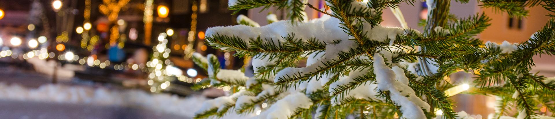 grankvist med snö