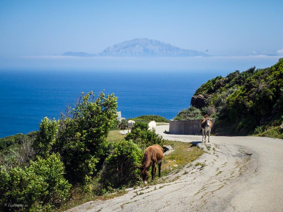 åsnor på vägen