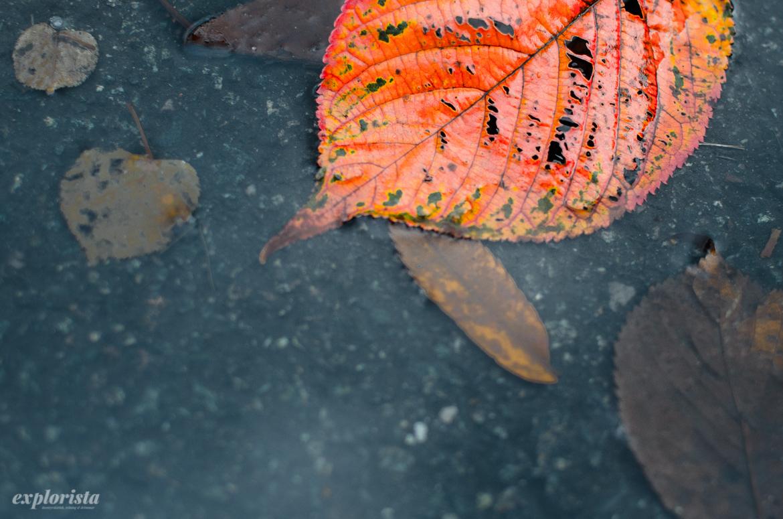 höstlöv orange i vatten