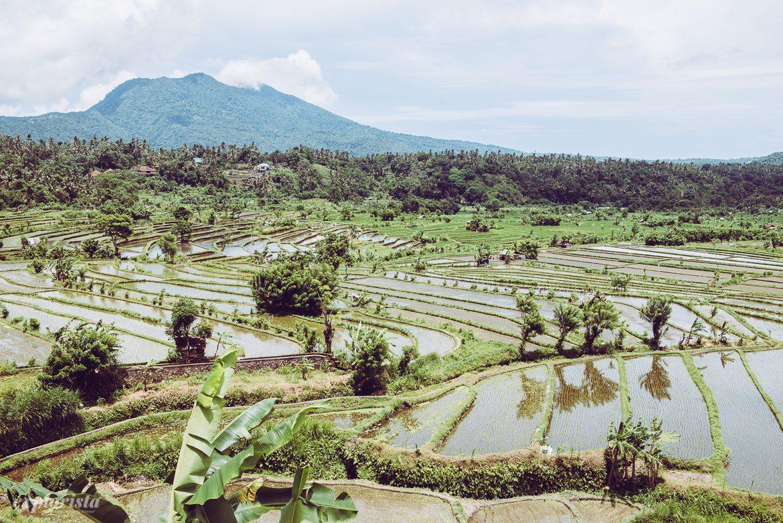 Risfält på Bali
