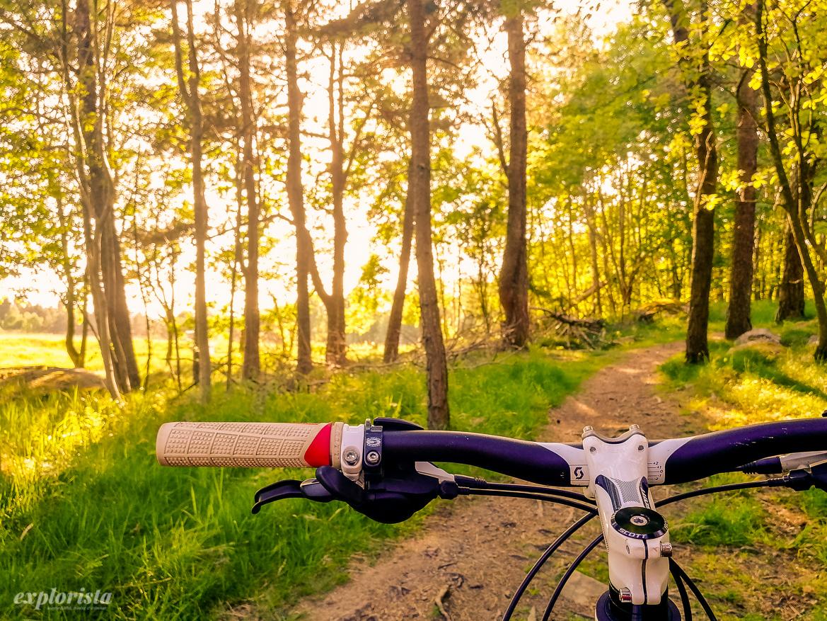 mountainbike i skogen i golden hour