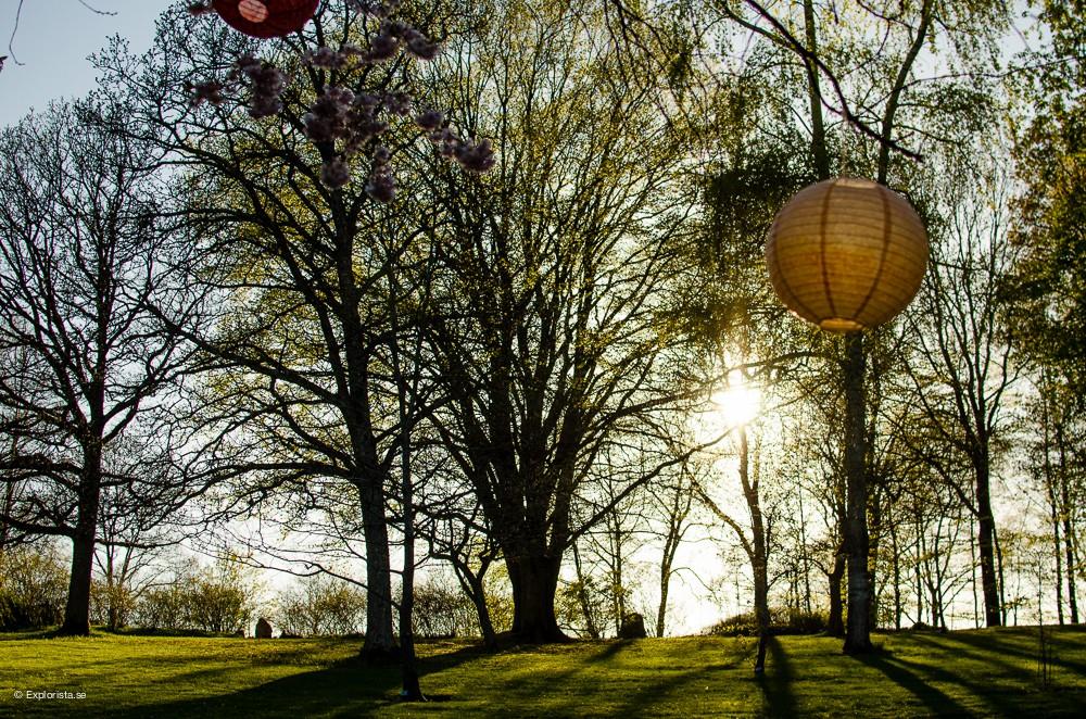 botaniska trädgården göteborg solnedgång