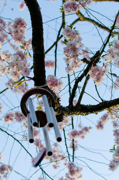 vindspel körsbärsträd