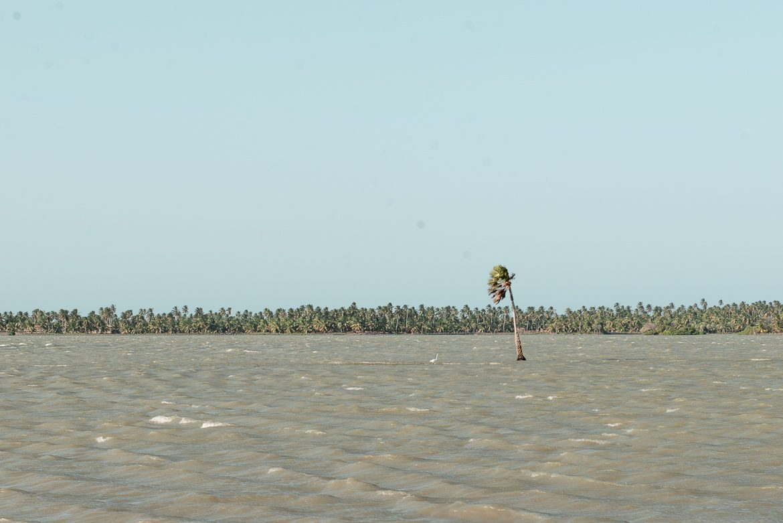 palm i sjö