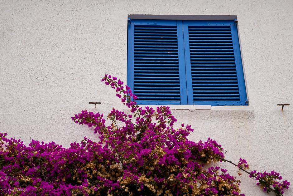 blå fönsterluckor rosa blommor
