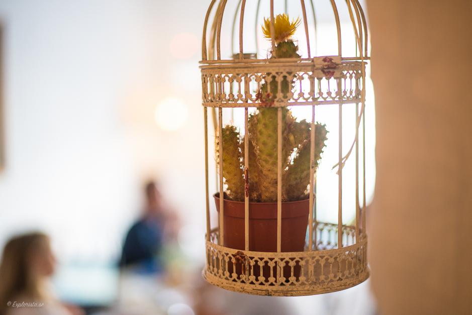 kaktus i fågelbur