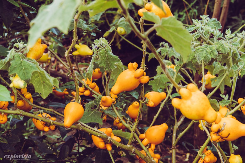 gula roliga frukter bali