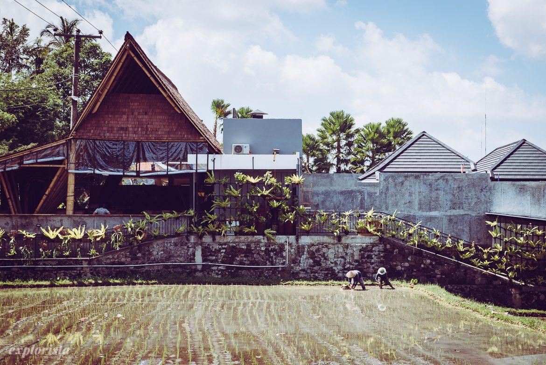 risfält ubud