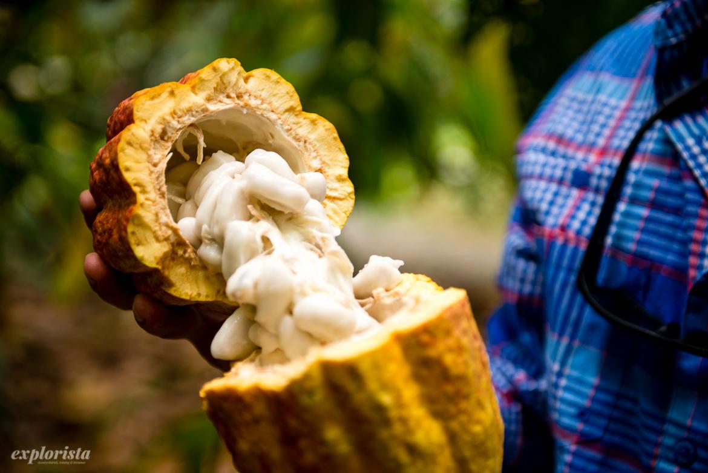 öppnad kakaoböna