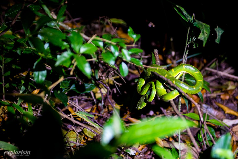grön viper-orm