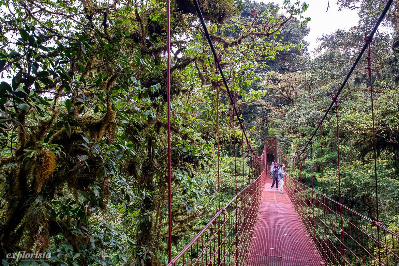 molnregnskog monteverde hängbro
