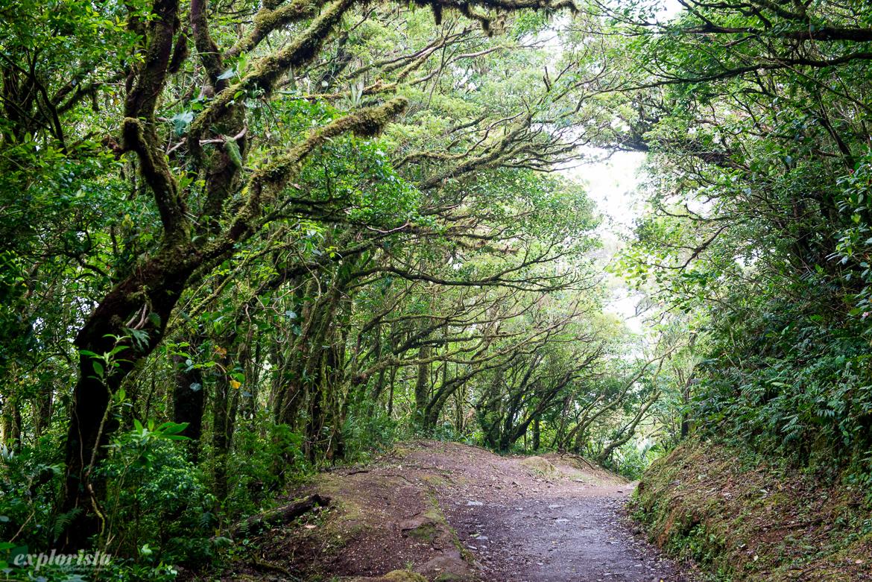 molnregnskog monteverde