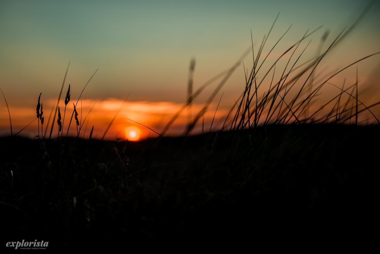 solnedgång och gräs i kontrast