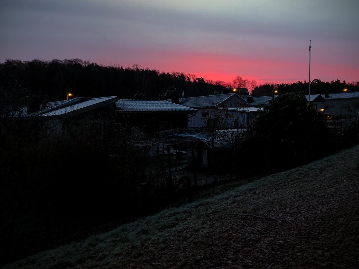 rosa soluppgång vintermorgon