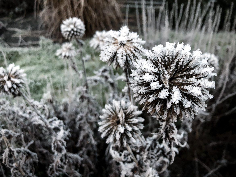 vinter frost