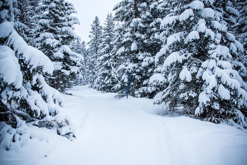vinterlandskap snöig skog