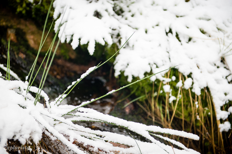 bäck i snö