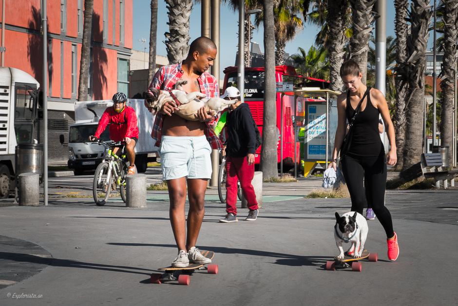 longboard med hund
