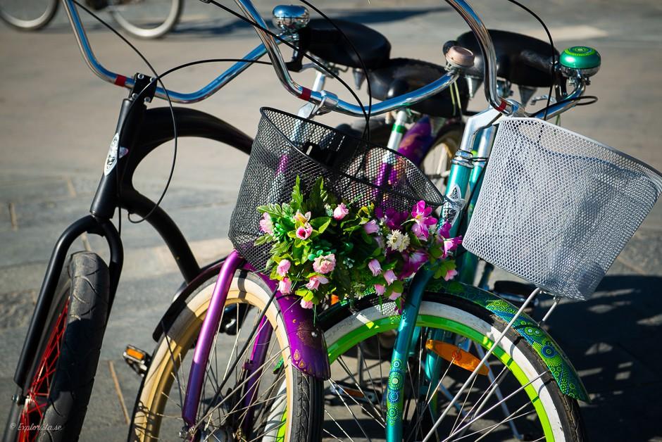 cykel med blommor