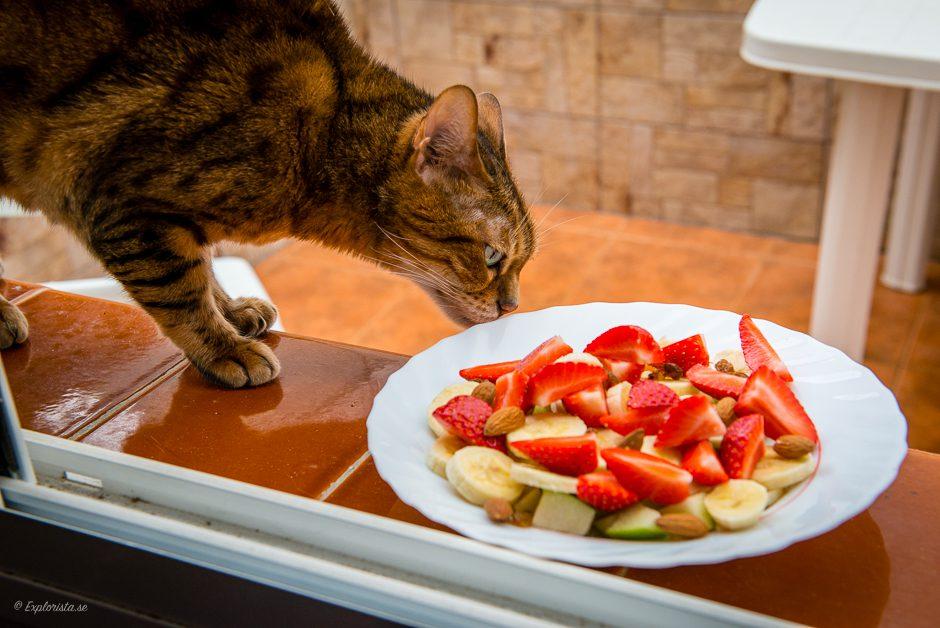 fruktsallad katt