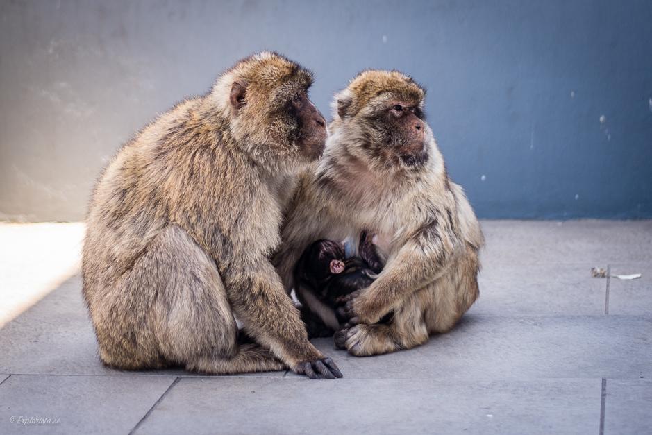 apor med bebis