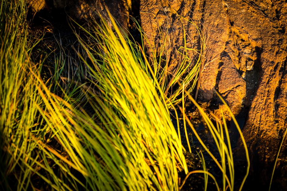 solnedgång hälsö klippa gräs