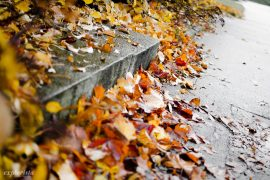 trottoar höstlöv