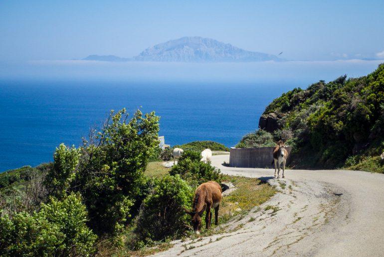 tarifa med utsikt över marocko