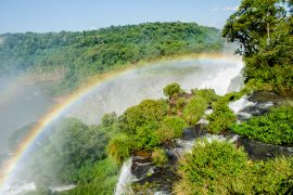 regnbåge i djungeln över iguazufallen