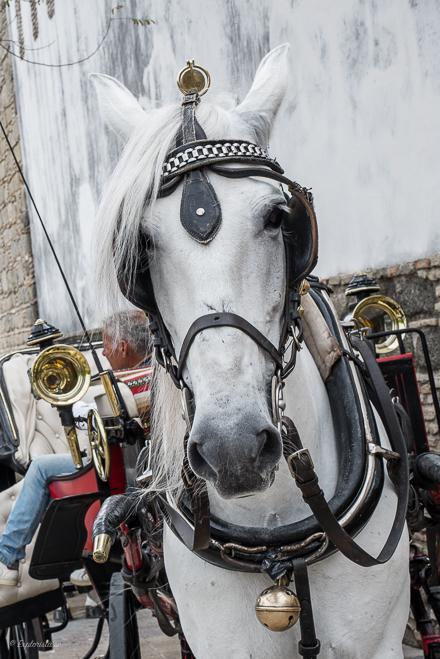 andalucier häst