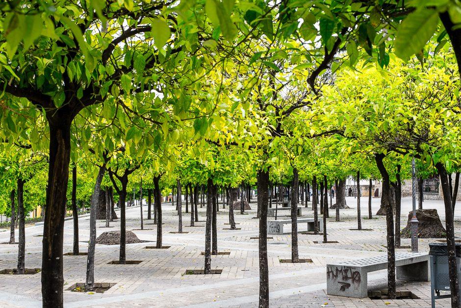 gröna små träd