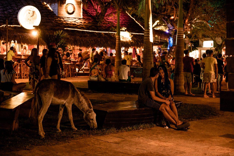 Jericoacoara Brasilien åsna på torget