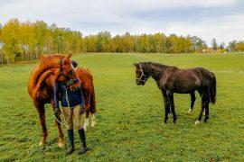 åsa och hästar