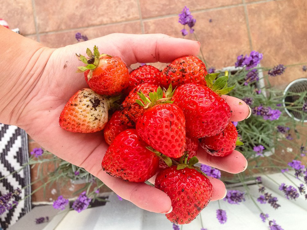 jordgubbar i hand