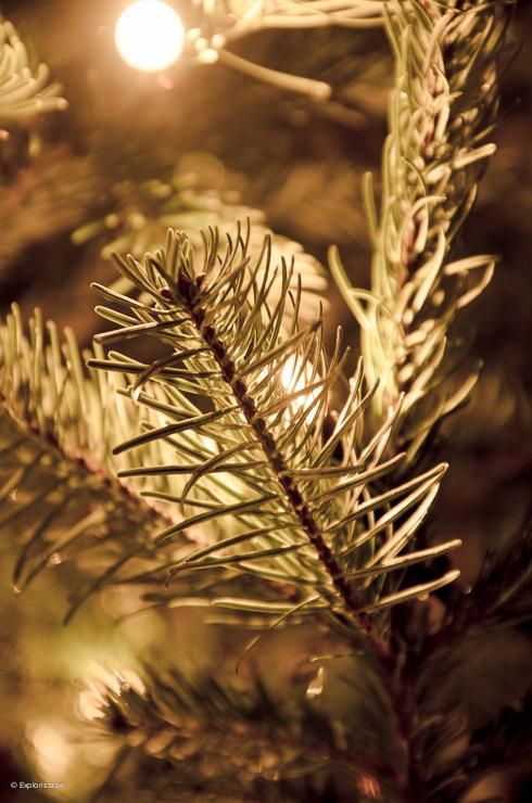 Gran - Jul på Liseberg