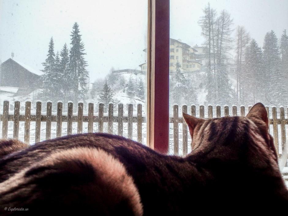 katt tittar ut på snön