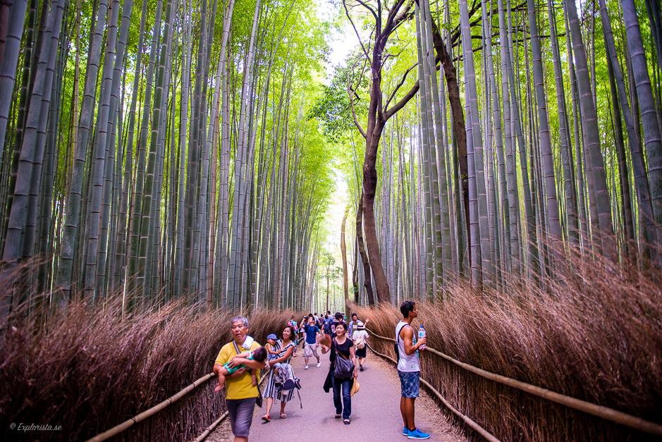 bambuskog kyoto