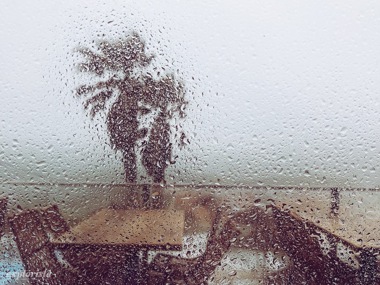 palm regn
