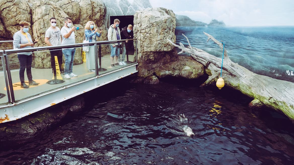 Lissabon akvarie