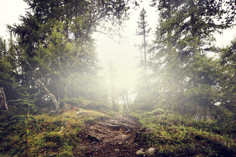 skog lundhags